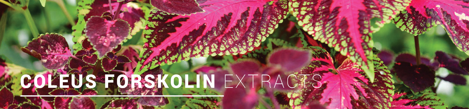 Coleus-Forskolin-Extracts