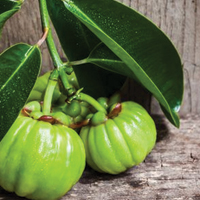 Garcinia Cambogia extracts