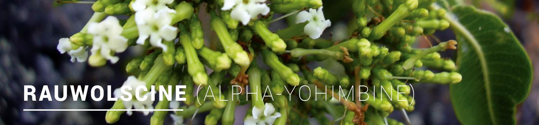Rauwolscine-ALPHA-YOHIMBINE